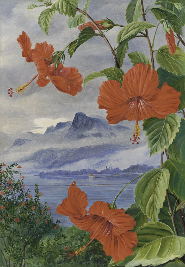 Detail of 488. Mandrinette and mountain home of the Pitcher Plant in the distance by Marianne North