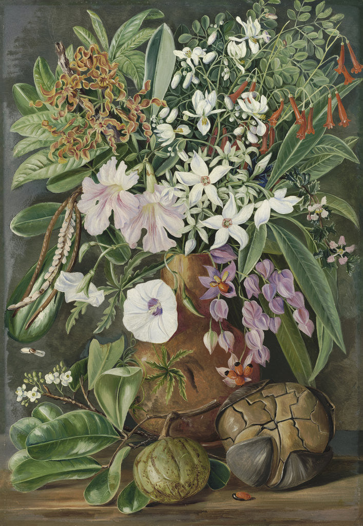 Detail of 498. A Selection of Flowers. Wild and Cultivated, with Puzzle Nut, Mahe. by Marianne North