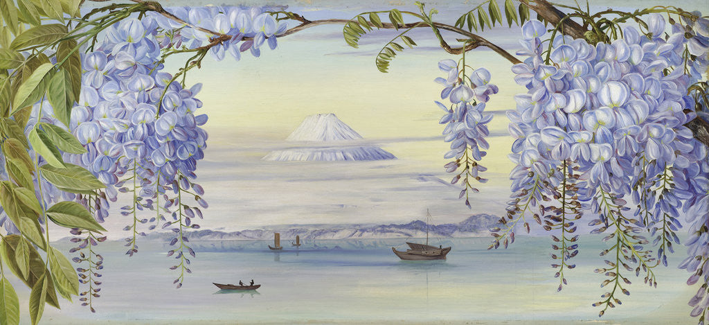 Detail of 658. Mount Fuji by Marianne North