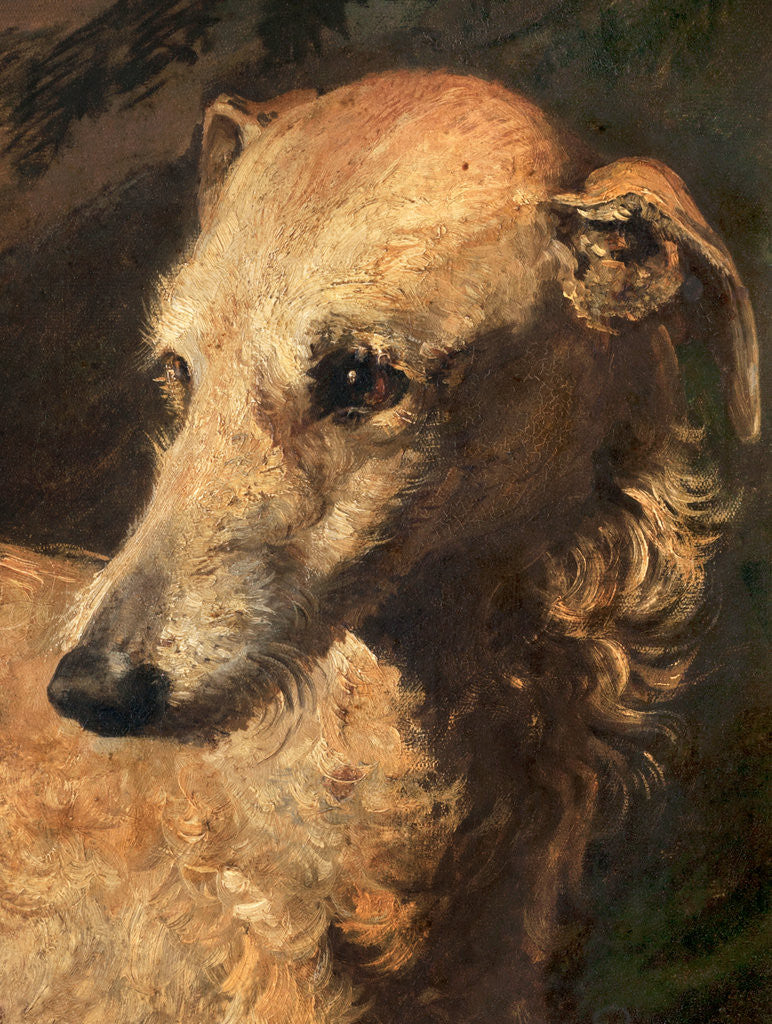 Detail of Head of Driver, a Deerhound Owned by the 5th Duke of Gordon by Edwin Henry Landseer