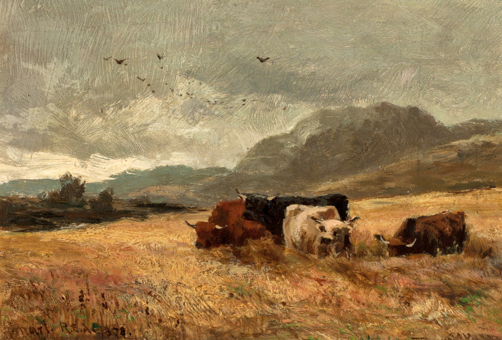 Detail of Highland Cattle in cornfield by John Smart