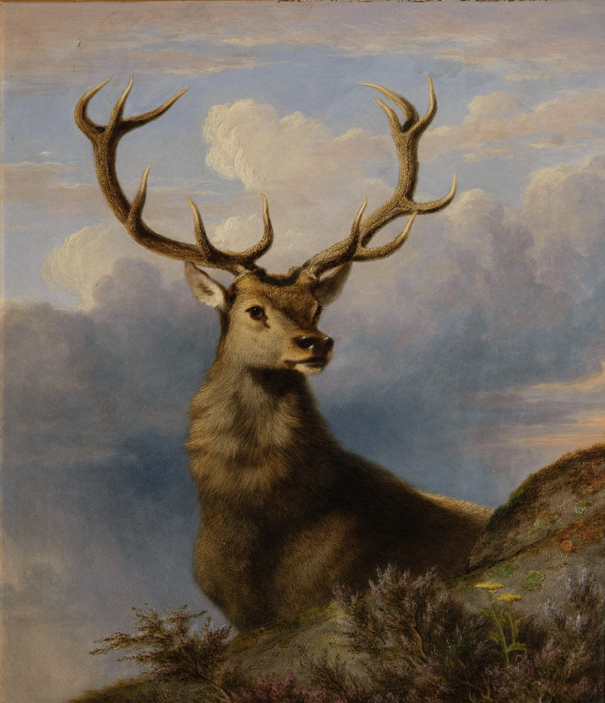 Detail of The Monarch of the Glen 1861 by James William Giles