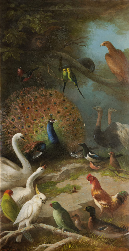 The Parliament of Birds by John Bucknell Russell