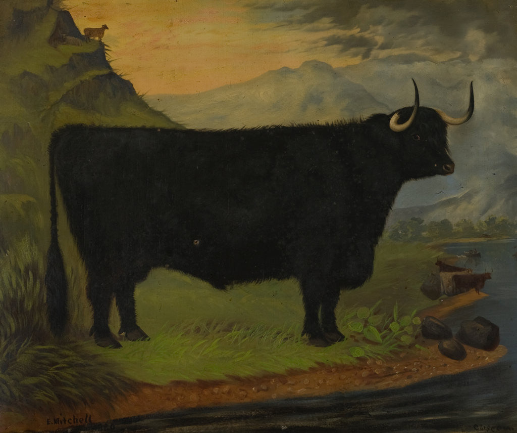 Detail of A Black Highland Bull in a Highland Landscape 1880 by E. Mitchell