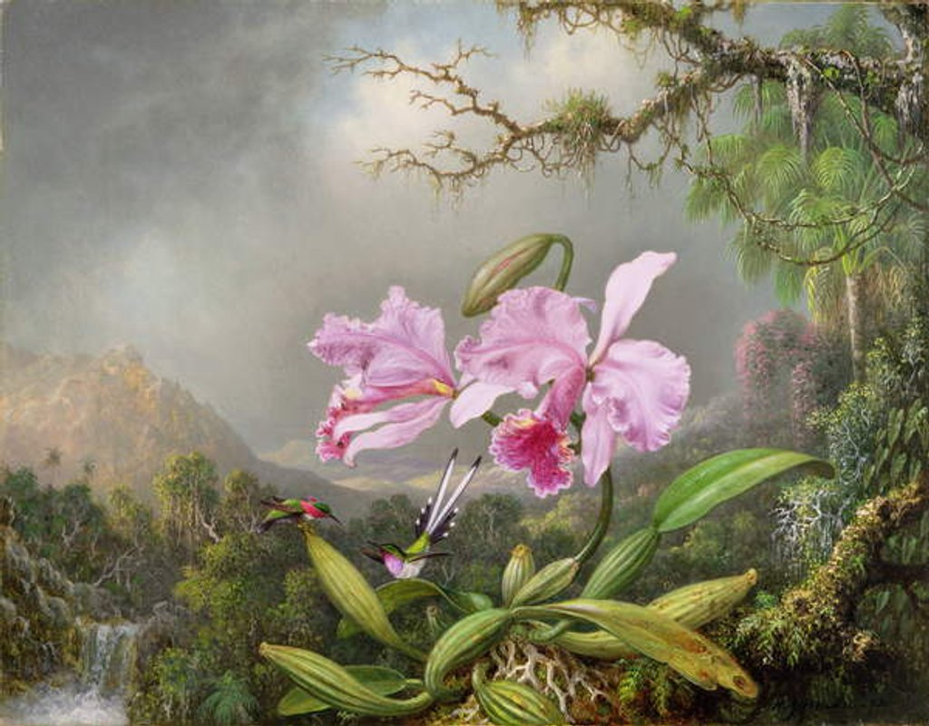 Detail of Study of an Orchid, 1872 by Martin Johnson Heade