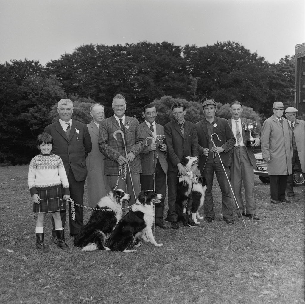Detail of Irish National Sheep Dog Trials by Manx Press Pictures