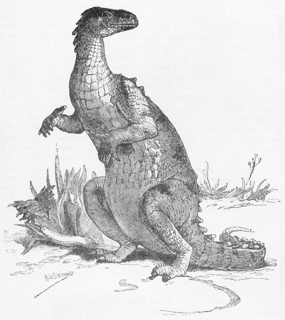 Detail of Illustration of Iguanodon by Corbis