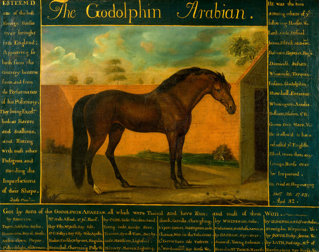 Detail of The Godolphin Arabian by Daniel Quigley