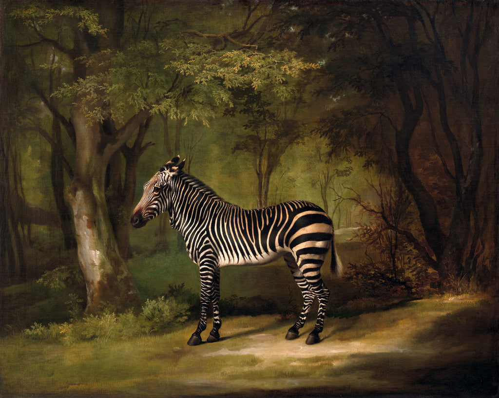 Detail of The First Zebra Seen in England by George Stubbs