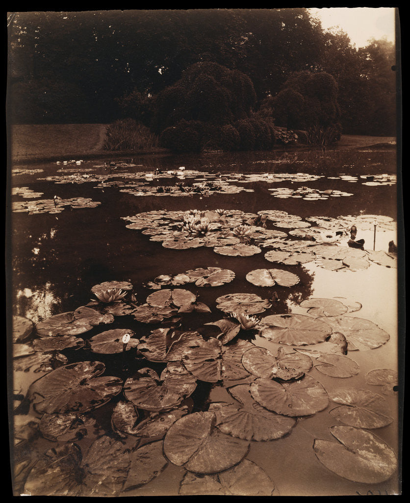Detail of Water Lilies by Eugène Atget