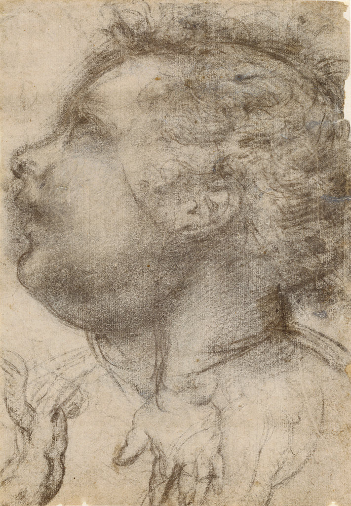 Detail of Head of a Child, an Angel and a Hand (recto), Male Figure (verso) by Fra Bartolommeo