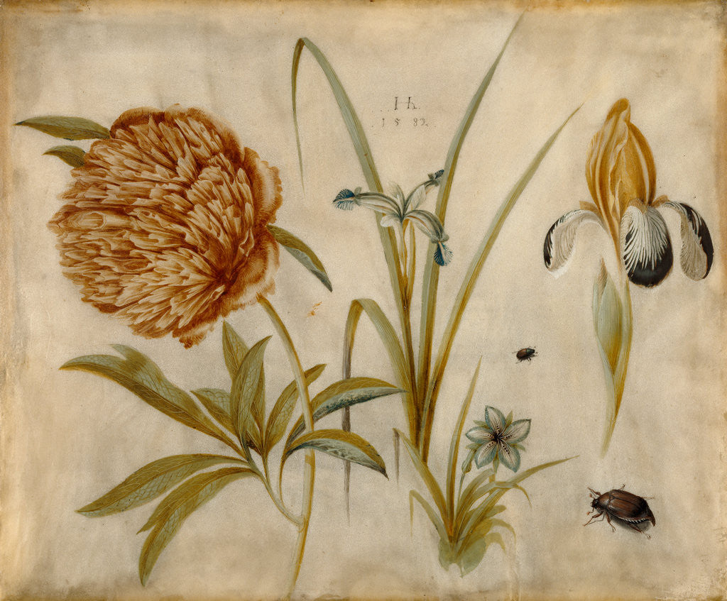 Detail of Flowers and Beetles by Hans Hoffmann