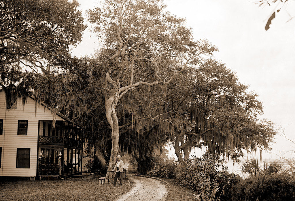 Detail of Bostrom's, near Ormond, Jackson, Bostrom's (Ormond Beach, Fla.), Buildings, United States, Florida, Ormond Beach, 1880 by William Henry