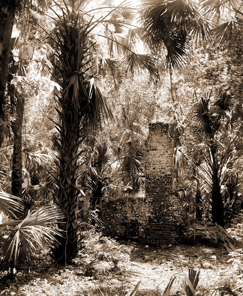 Detail of Chimneys, Ormond hammock, The, Jackson, Chimneys, Palms, Ruins, United States, Florida, Ormond Beach, 1880 by William Henry