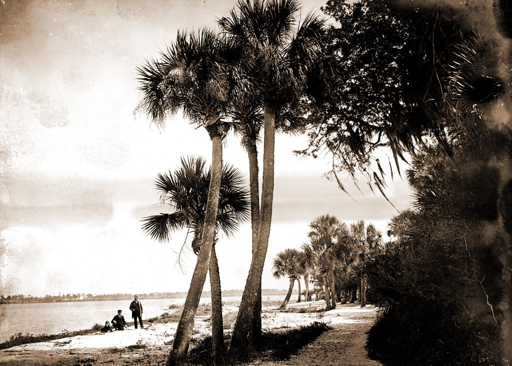 Detail of Indian River at Cocoa, Fla, Jackson, Palms, Waterfronts, Bays, United States, Florida, Indian River, United States, Florida, Cocoa, 1880 by William Henry