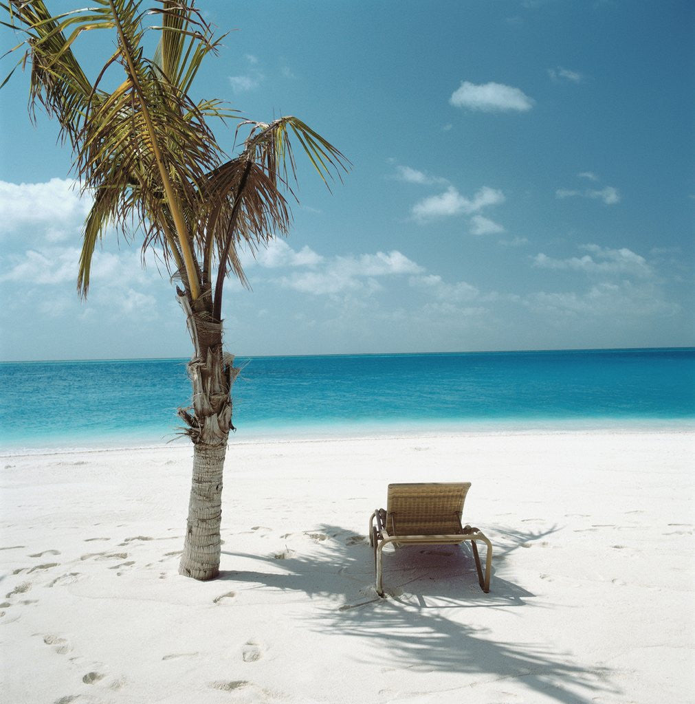 Palm Tree Beach: Palm Tree And Beach Chair Posters & Prints By Corbis