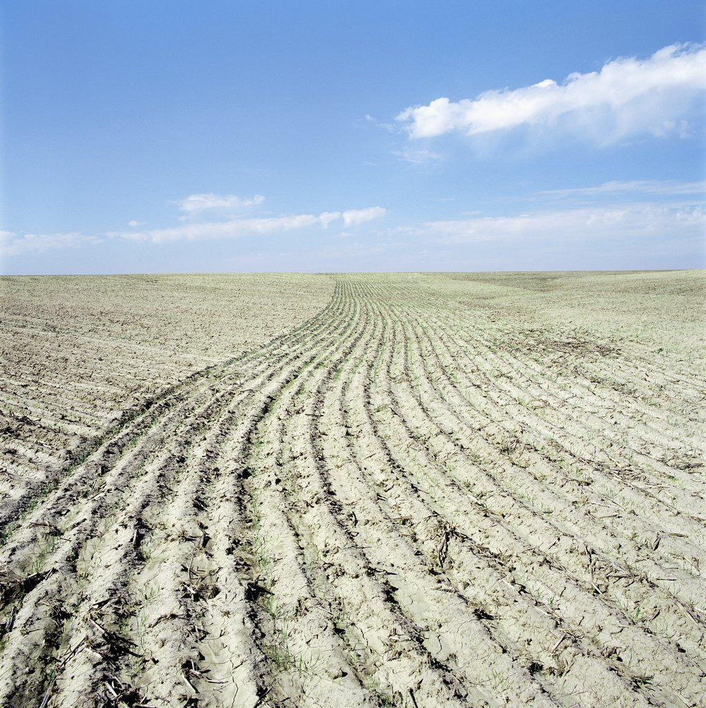 Detail of Dry furrowed farmland by Corbis