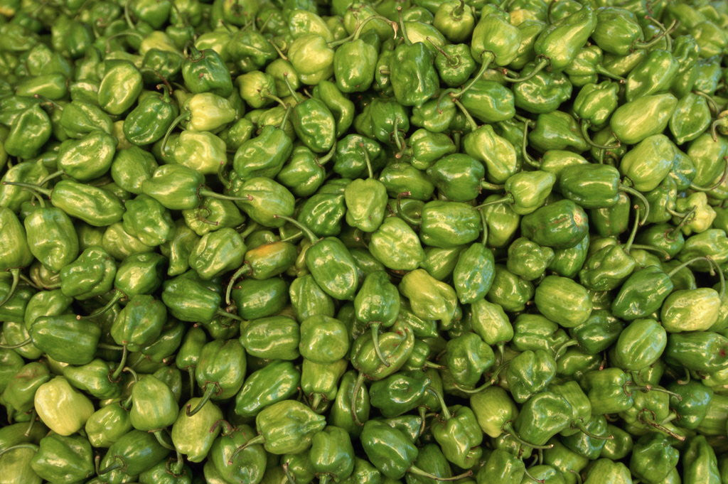 Detail of Habanero Chilies at the Central Market by Corbis