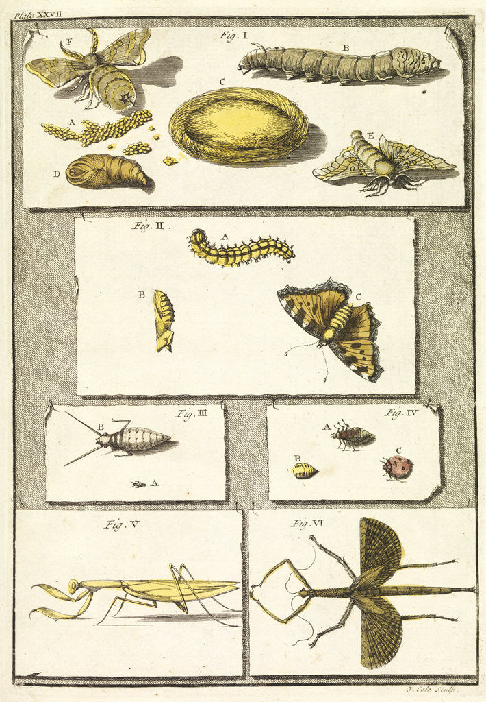 Detail of Studies of the silk worm and other insects by T Cole