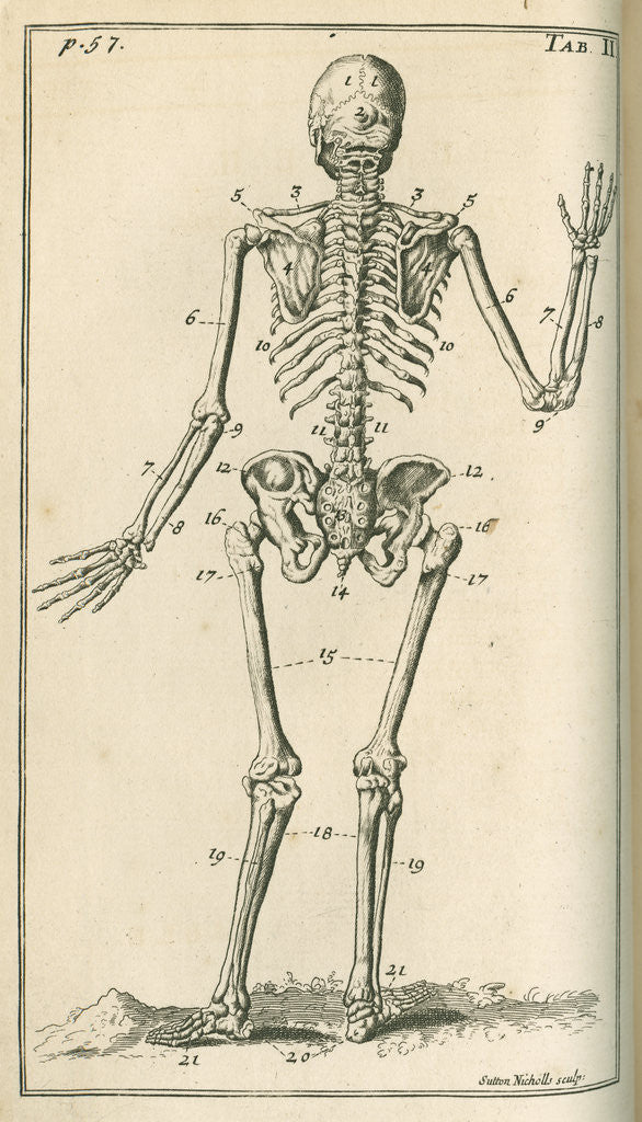 Detail of Back view of a skeleton by Sutton Nicholls