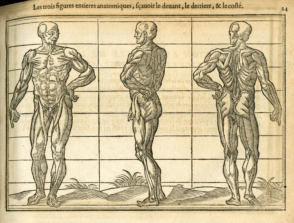 Detail of Three anatomical male figures by unknown