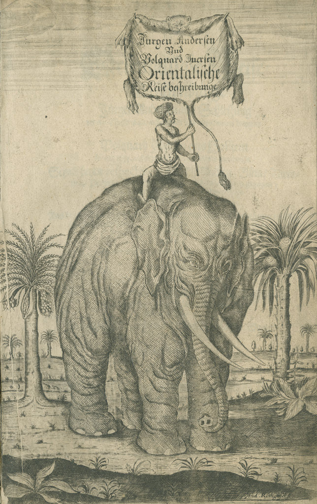 Detail of Indian elephant by Andreas Lorenzen Rothgiesser