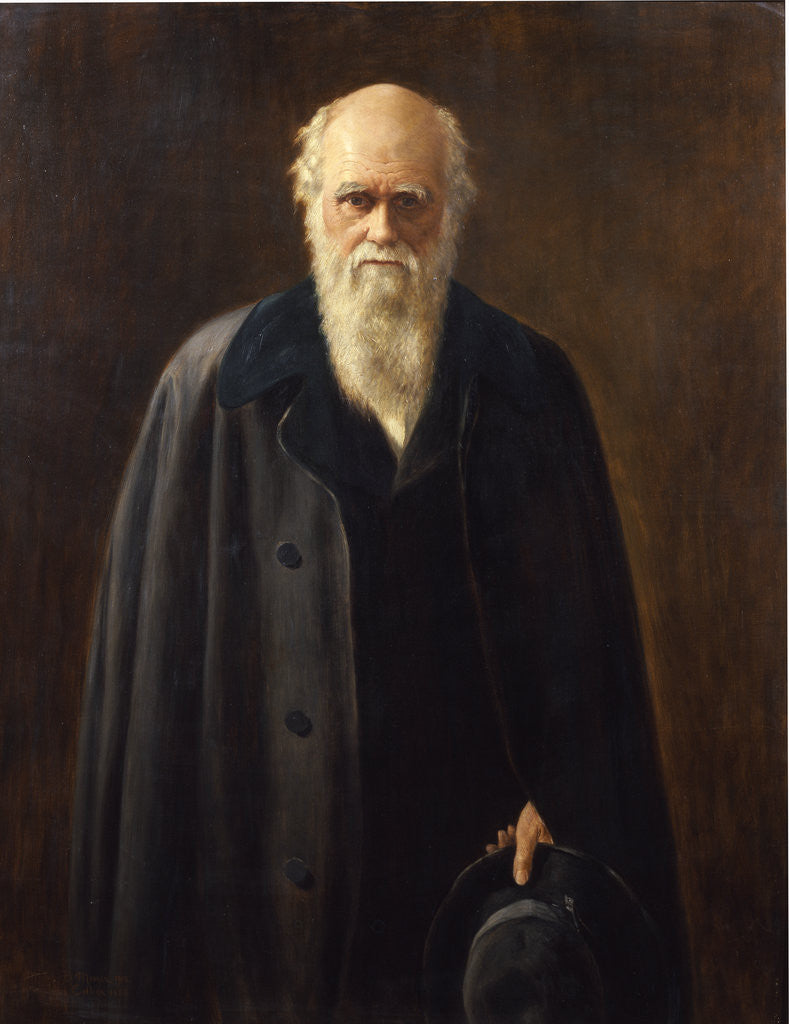 Detail of Portrait of Charles Darwin (1809-1882) by Mabel Messer