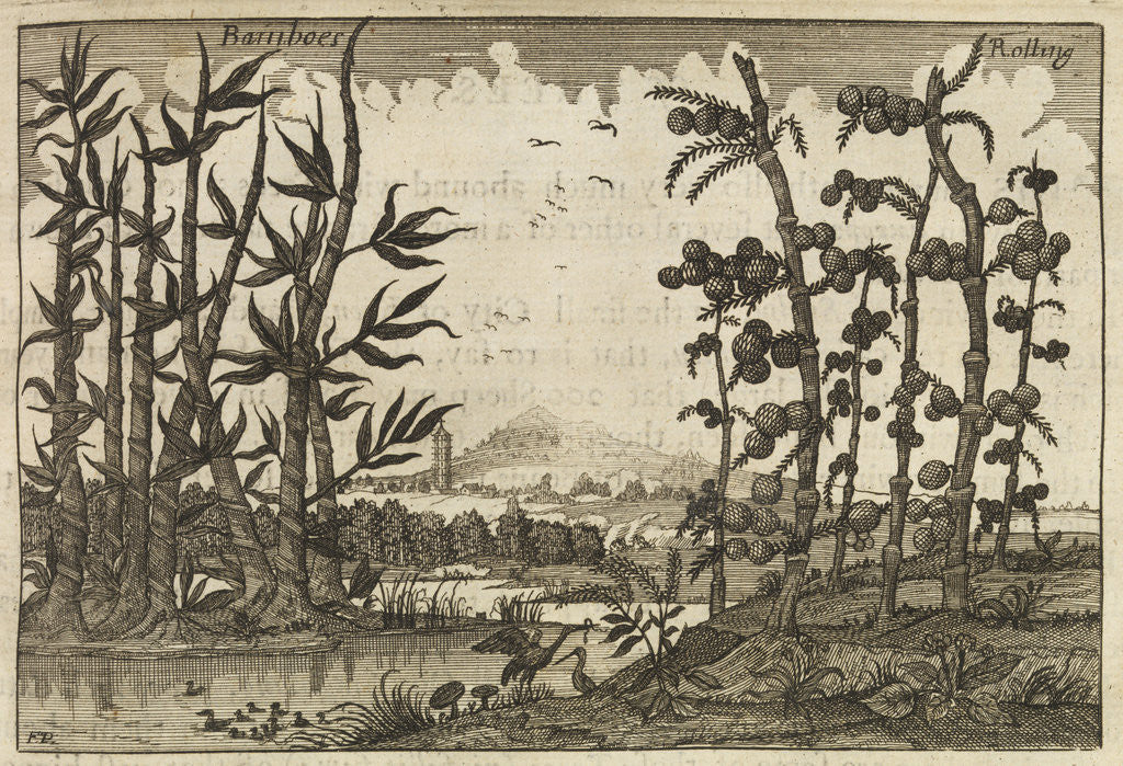 Detail of Bamboes [Bamboo] by Wenceslaus Hollar