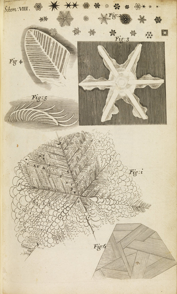 Detail of Microscopic view of frozen figures by Robert Hooke