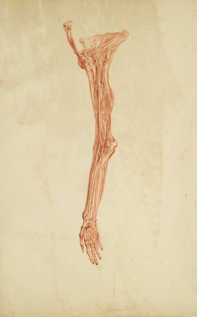 Detail of Anatomical study of arm and hand by Andreas van Rymsdyk