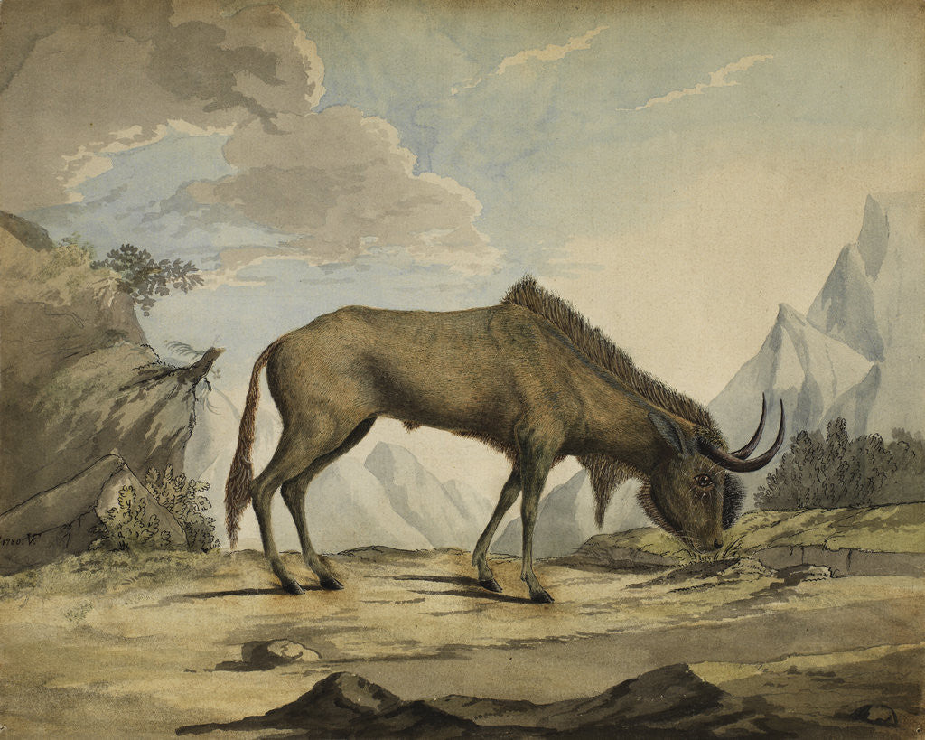 Detail of American bison by Anonymous