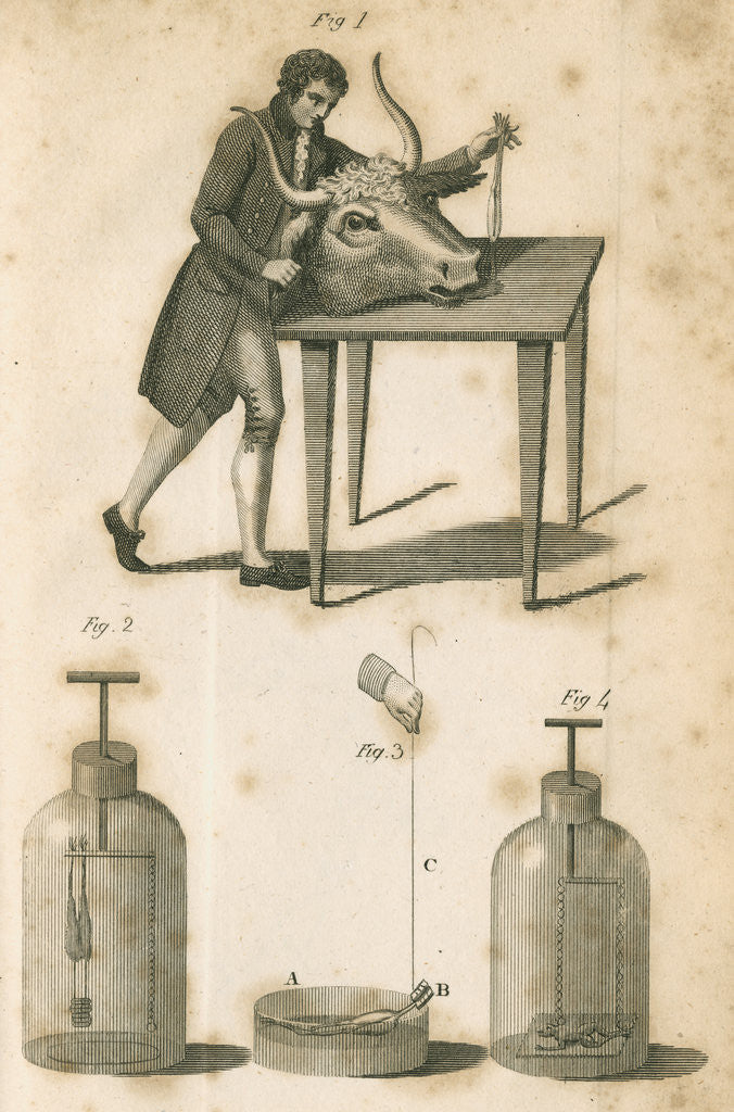 Detail of Experiments on galvanism by Anonymous