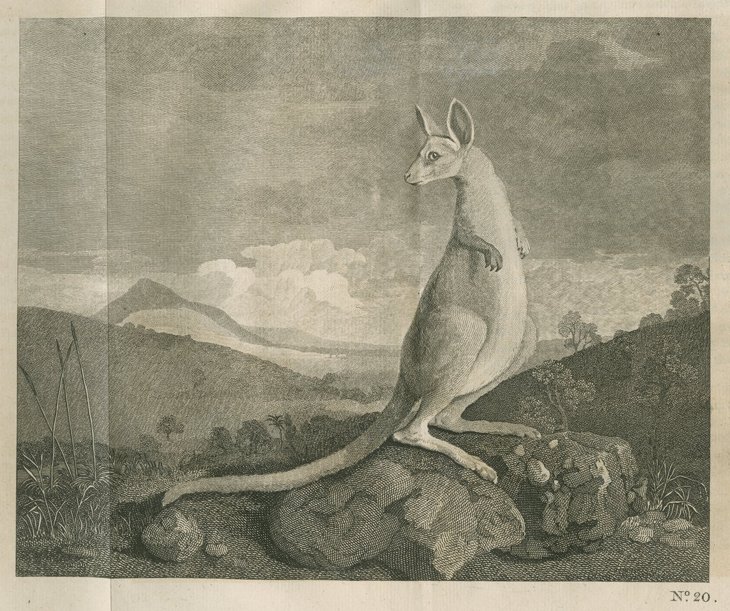 Detail of Sighting of a kangaroo by James Cook by Anonymous