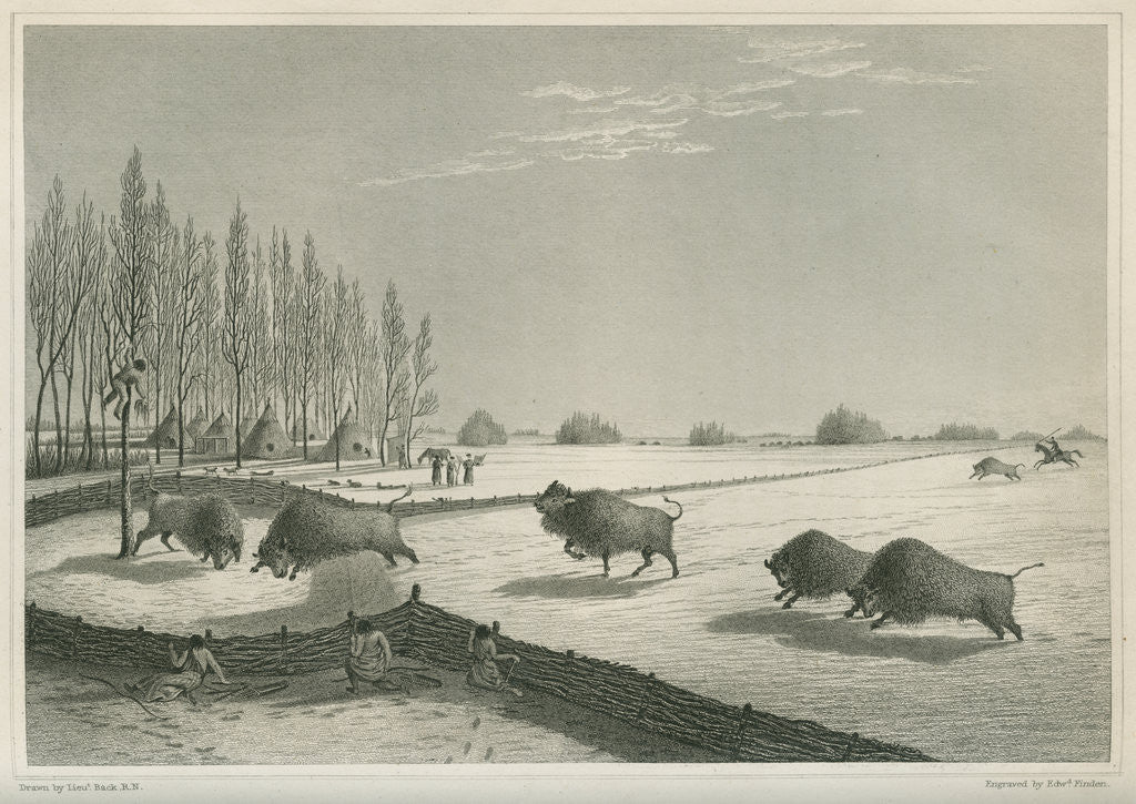 Detail of A buffalo pound, Feb. 8 1820 by Edward Francis Finden