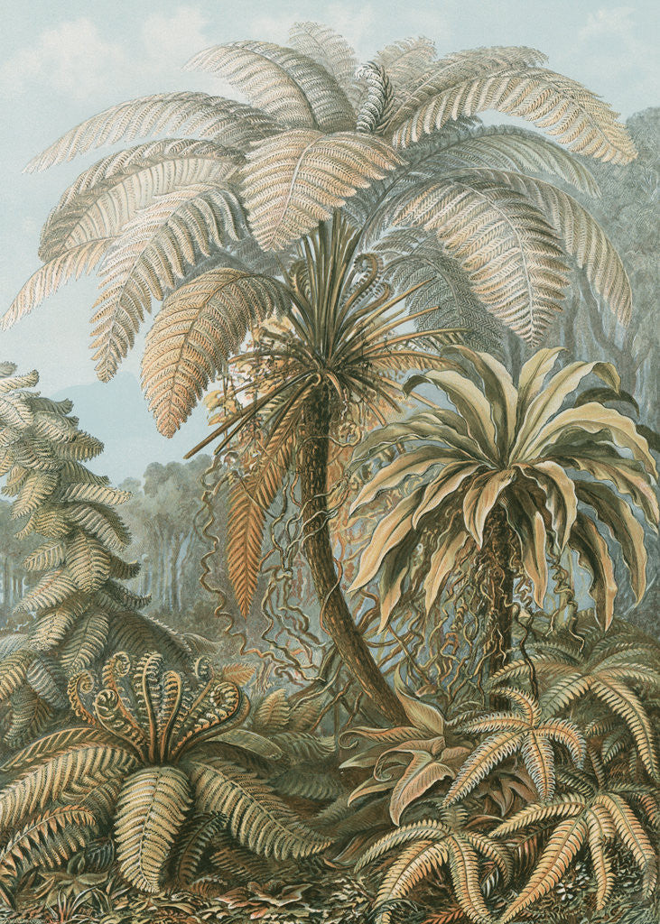 Detail of 'Filicinae' [tropical ferns] by Adolf Giltsch