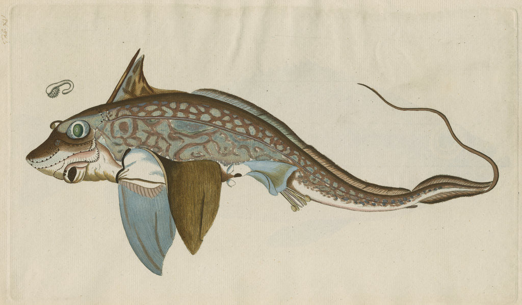 Detail of 'La Chimere' [Rabbitfish] by Anonymous