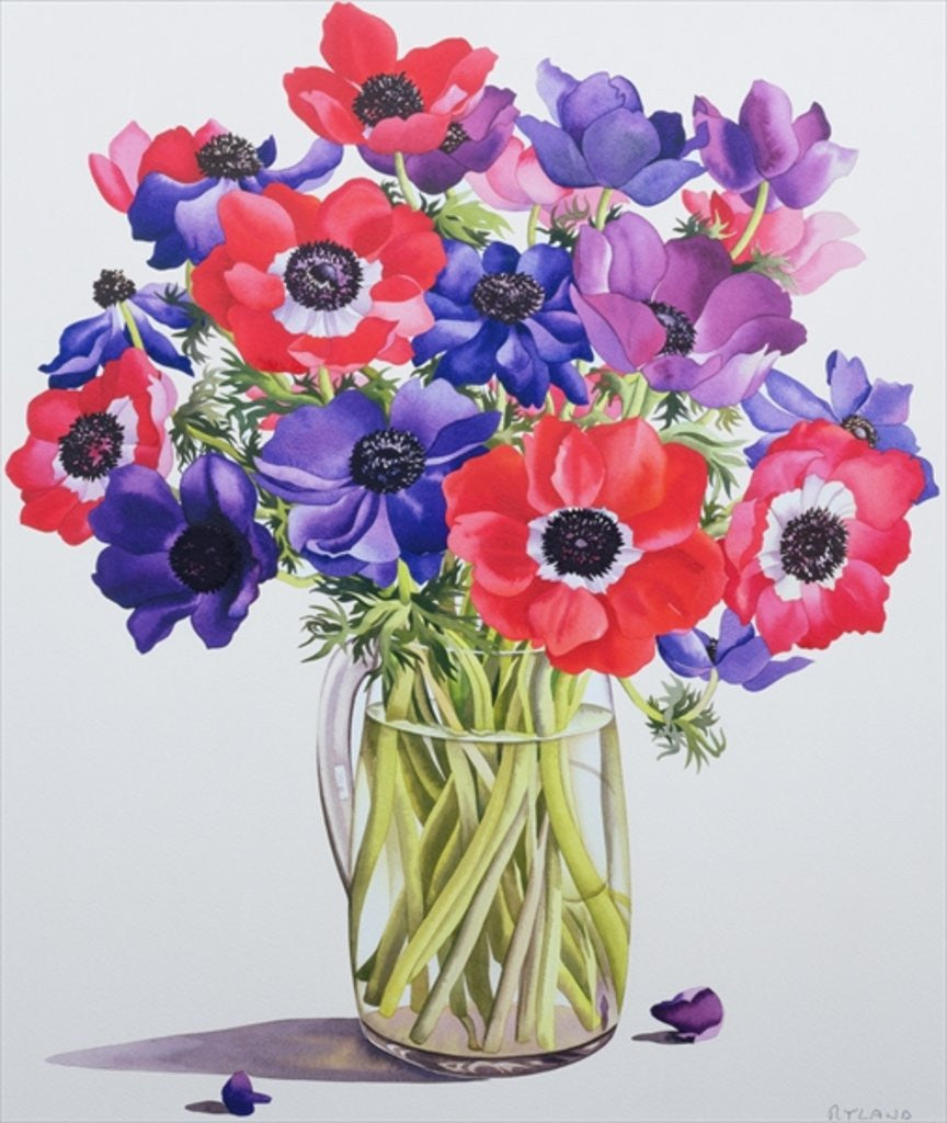Detail of Anemones in a glass jug by Christopher Ryland