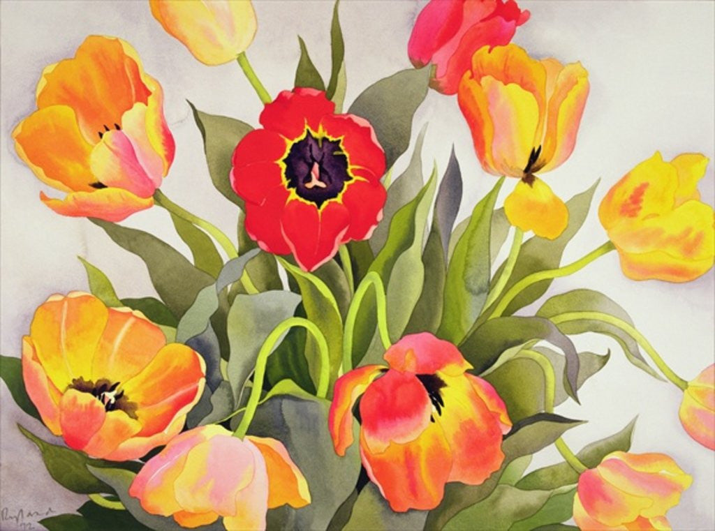 Detail of Orange and Red Tulips by Christopher Ryland