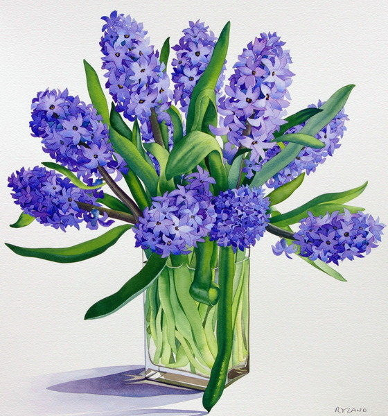 Detail of Blue Hyacinths by Christopher Ryland