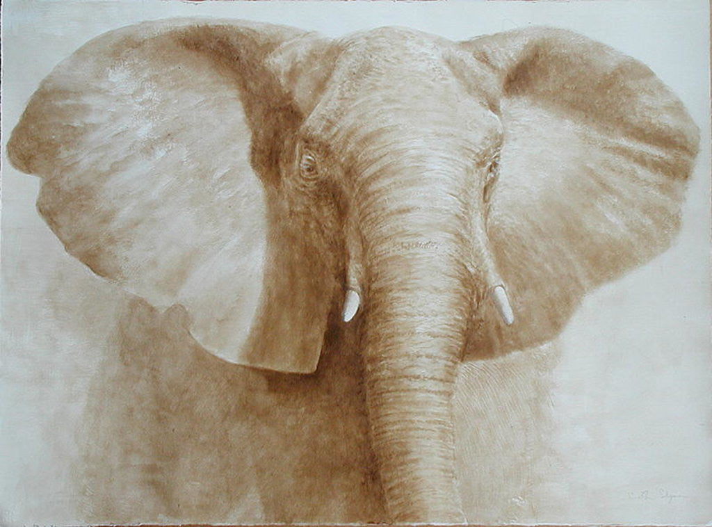 Detail of Elephant by Lincoln Seligman