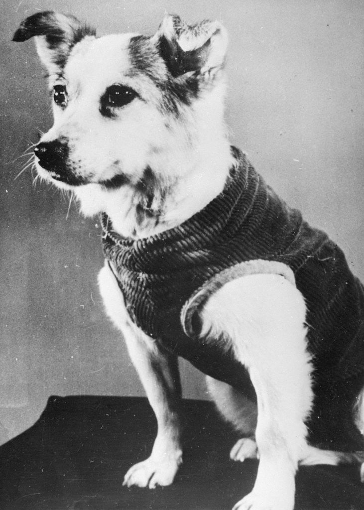 Detail of Dog Wearing Sweater by Corbis