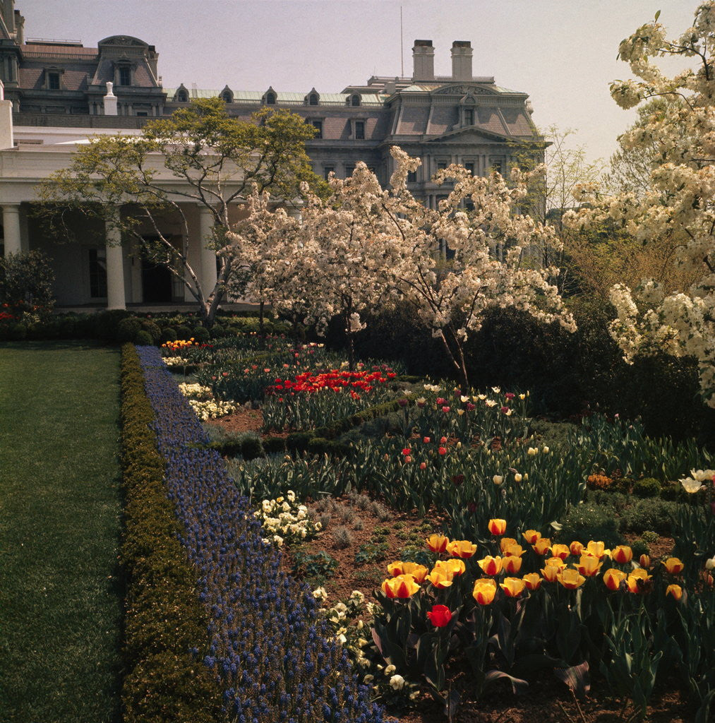 White House Rose Garden posters & prints by Corbis