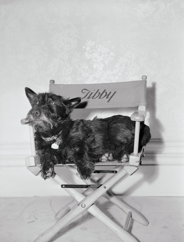 Detail of Bette Davis's Dog Tibby by Corbis