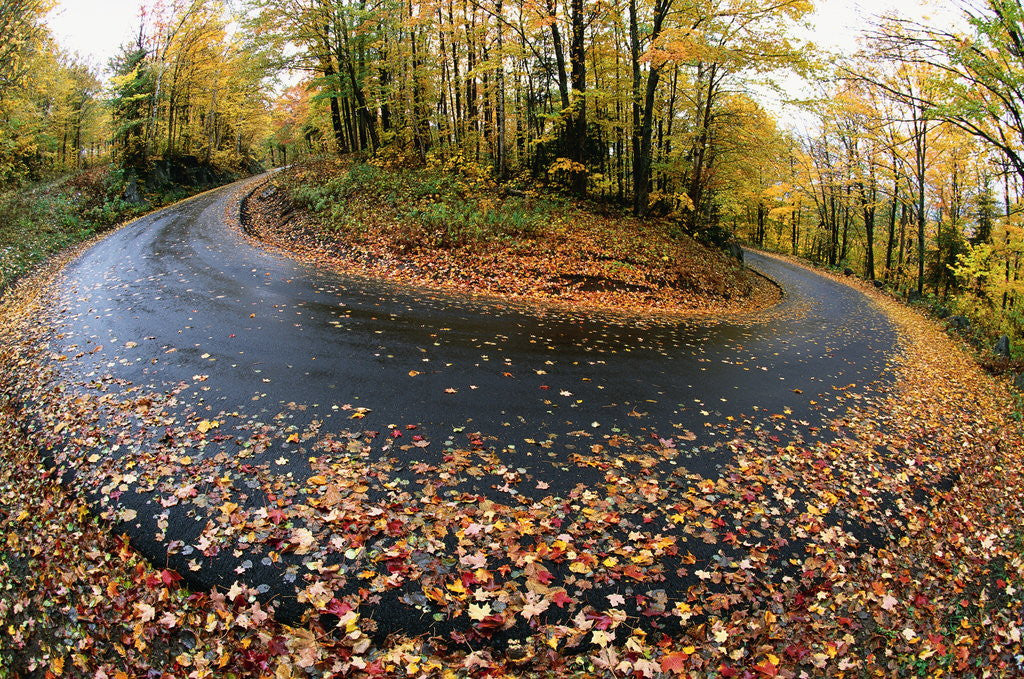 Detail of Autumn Leaves on a Curved Road by Corbis