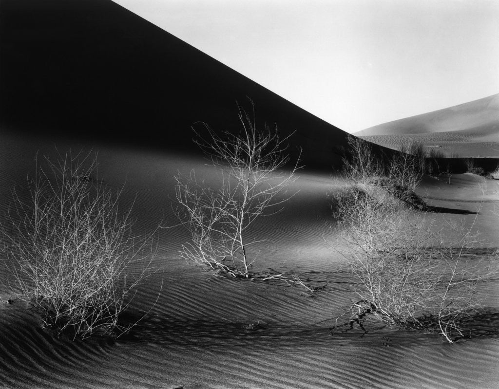 Detail of Dunes, California, 1953 by Corbis