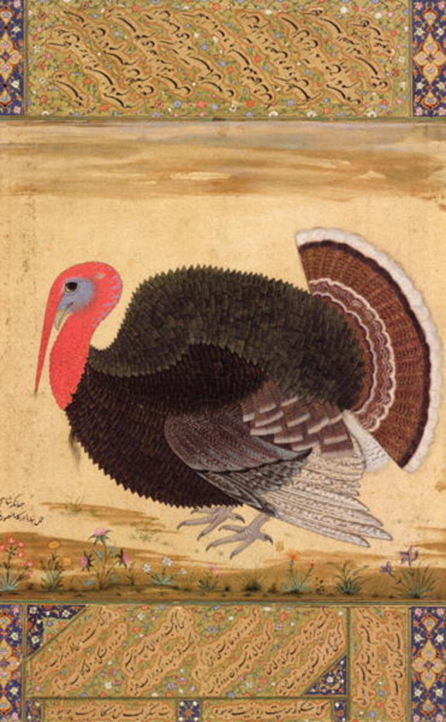 Detail of A turkey-cock, brought to Jahangir from Goa in 1612 by Mansur