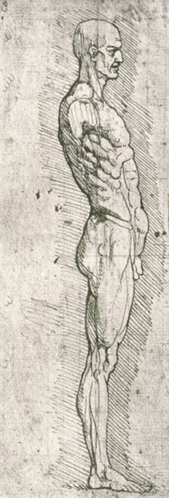 Detail of Anatomical Study by Leonardo da Vinci