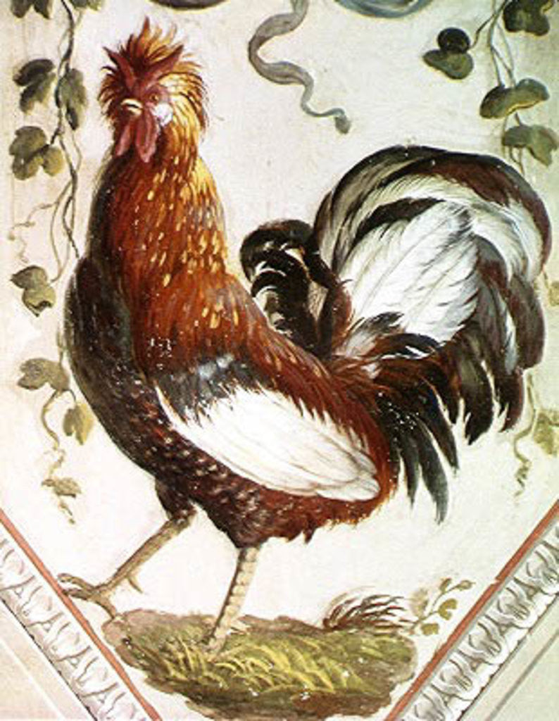Detail of Detail of a cockerel by Pietro Rotati