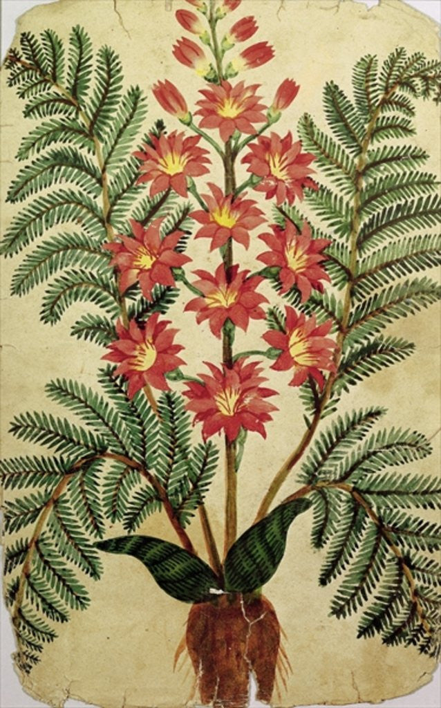 Detail of Fern with red and yellow flowers by French School