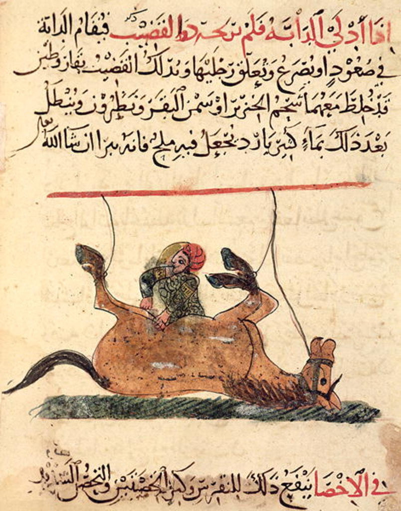 Operation on a horse by Islamic School